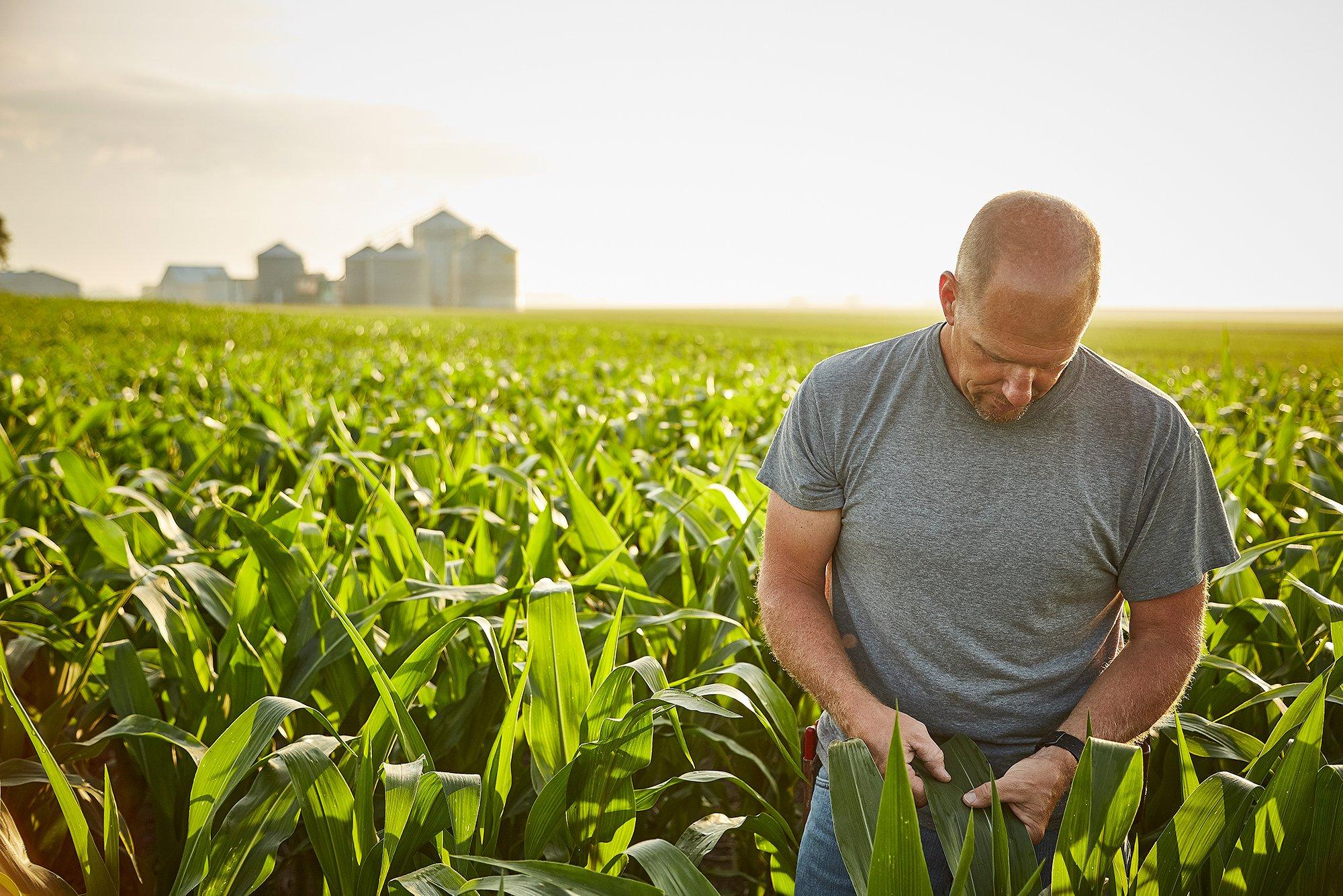 man_corn_farmer_harvest_field_outside