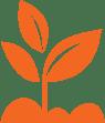 orange plant-1